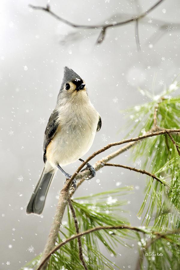 Snowy Songbird Digital Art