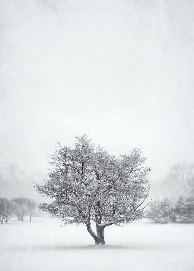 Snowy Tree Photograph
