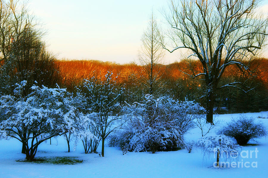 Snowy Trees In December Twilight - Pearl S. Buck Homestead Photograph