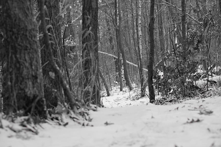 Images of Snowy Woods By Shteuf - #SC
