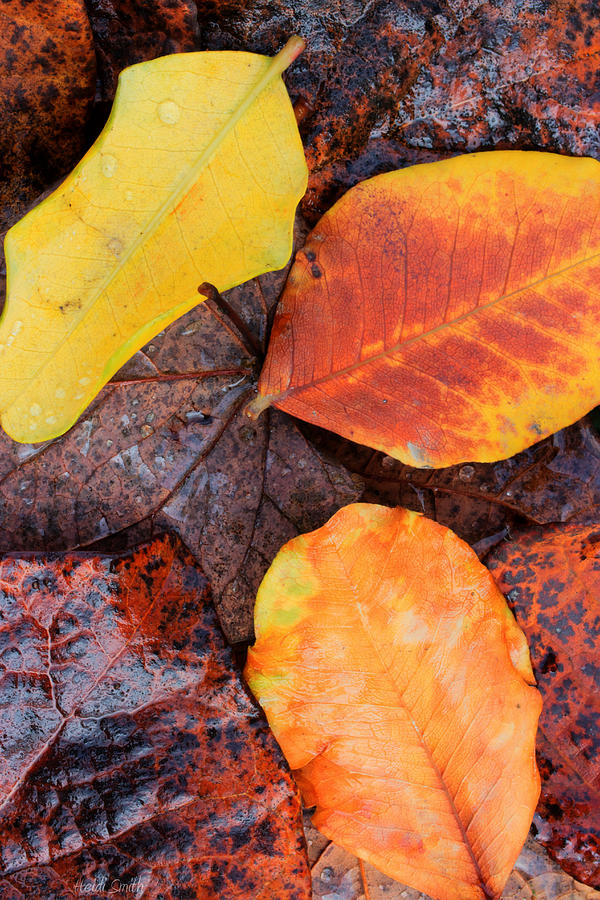 Dew Photograph - So Cal Autumn by Heidi Smith