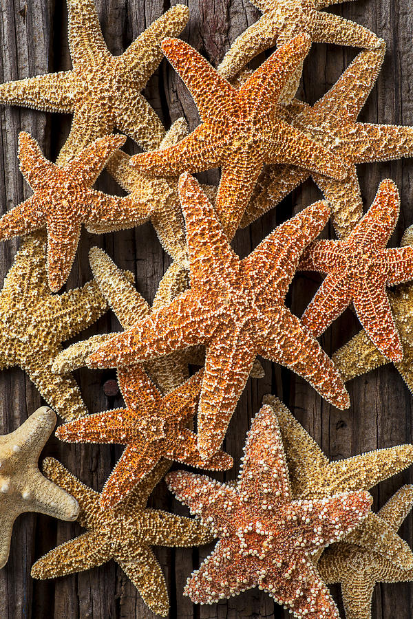 Starfish Photograph - So Many Starfish by Garry Gay