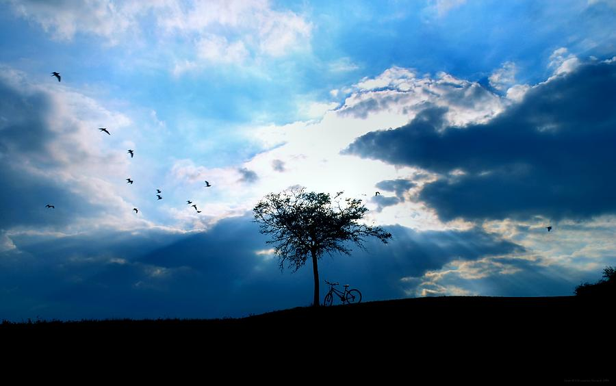 Birds Photograph - Soar by Chrystyne Novack