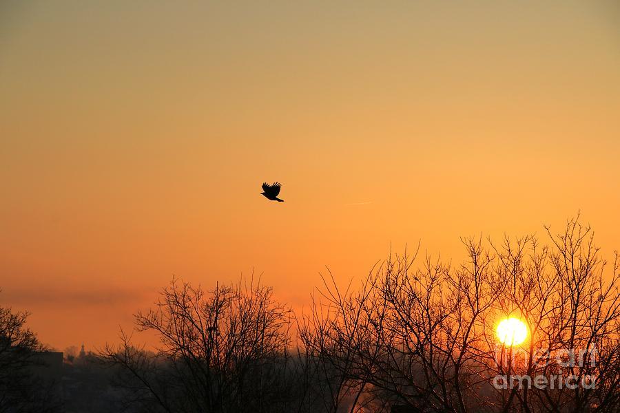 Sunrise Photograph - Soaring Sunrise 1 by Jay Nodianos