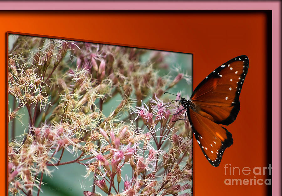Social Butterfly 03 Photograph