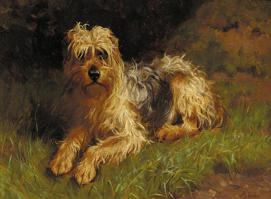Domestic Animal; Grass; Dog; Pet; Soft Coated; Terrier; Plants And Animals; Domestic; Dirt; Paws Painting - Soft Coated Wheaten Terrier  by Alfred Duke