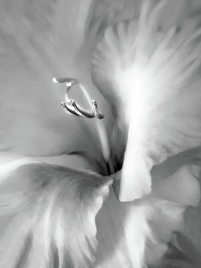 Soft Silver Gladiola Floral Photograph