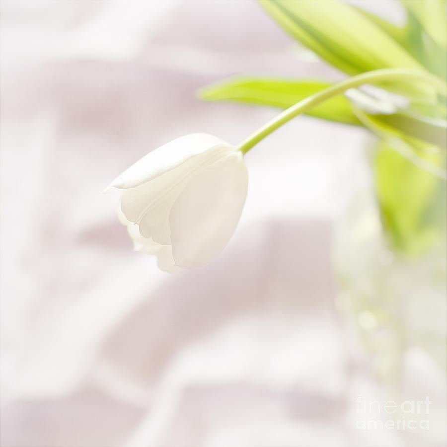 Softly White Photograph