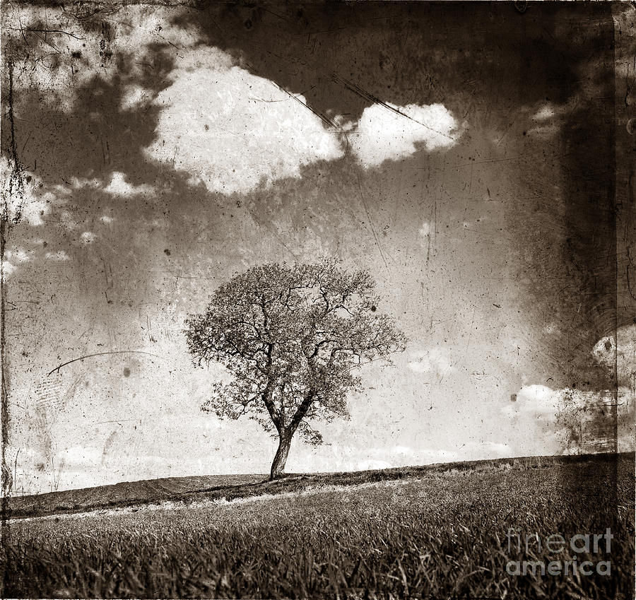 Solitary Tree In Limagne Landscape. Auvergne. France Photograph