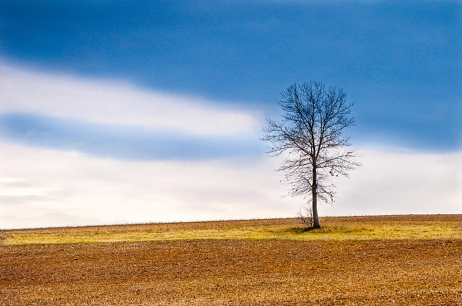 Solitude Photograph  - Solitude Fine Art Print