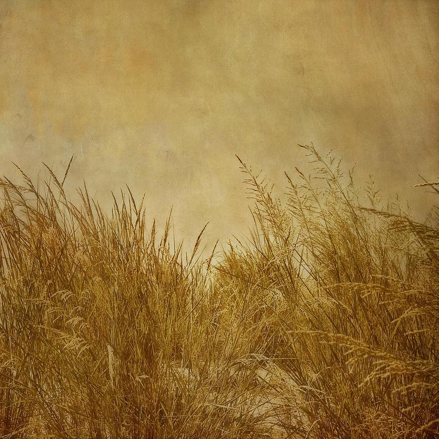 Beach Photograph - Solitude by Kim Hojnacki