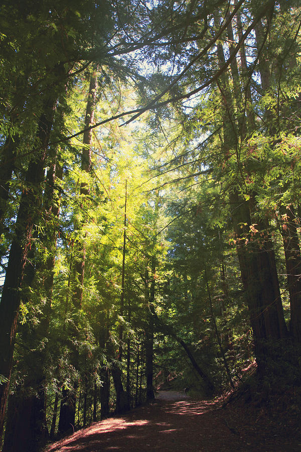 Thornewood Open Space Preserve Photograph - Some Days Really Shine by Laurie Search