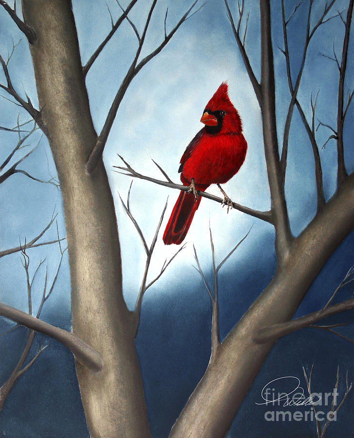 Song Birds - Northern Male Cardinal Painting  - Song Birds - Northern Male Cardinal Fine Art Print