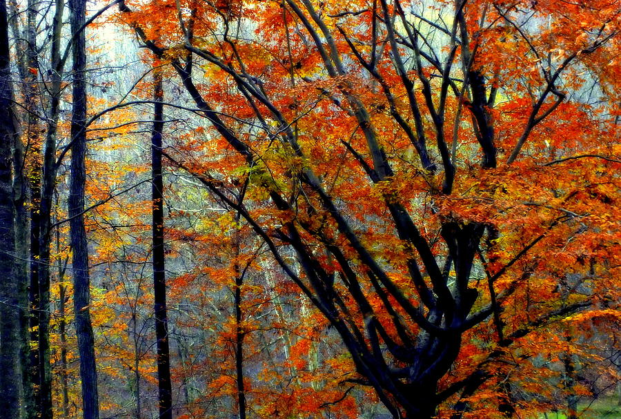 Song Of Autumn Photograph  - Song Of Autumn Fine Art Print