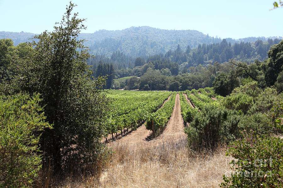Sonoma Vineyards In The Sonoma California Wine Country 5d24516 Photograph