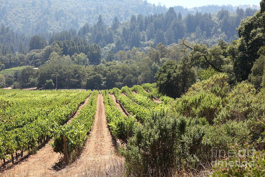 Sonoma Vineyards In The Sonoma California Wine Country 5d24518 Photograph