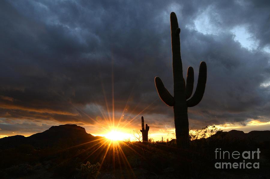 Sonoran Desert Rays Of Hope Photograph