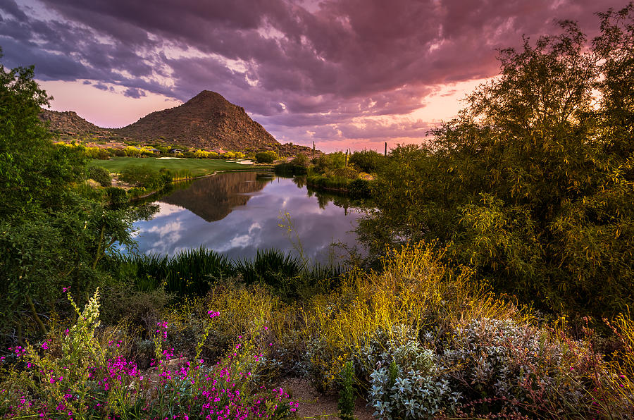 Arizona Photograph - Sonoran Desert Spring Bloom Sunset  by Scott McGuire