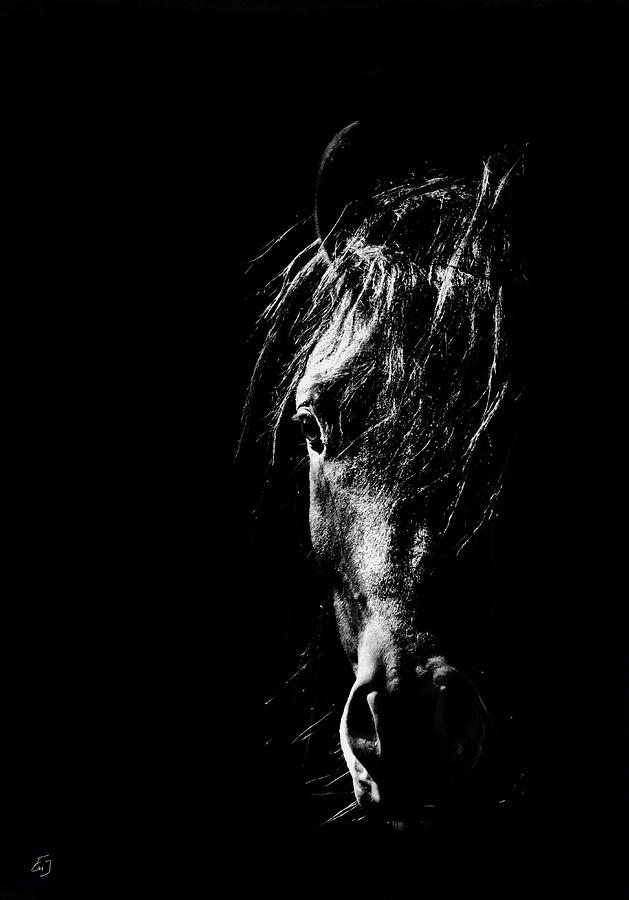 Horse Photograph - Soul Searcher by Emily Stauring