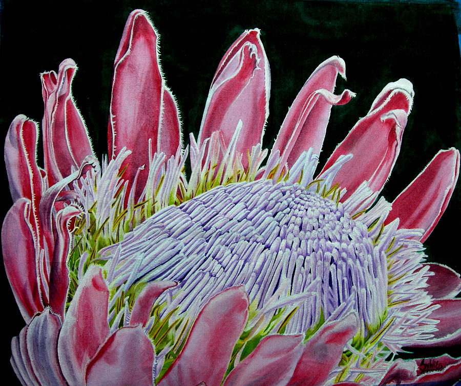South African Flower Protea Painting Painting  - South African Flower Protea Painting Fine Art Print