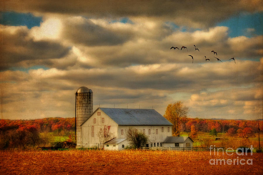 South For The Winter Photograph  - South For The Winter Fine Art Print