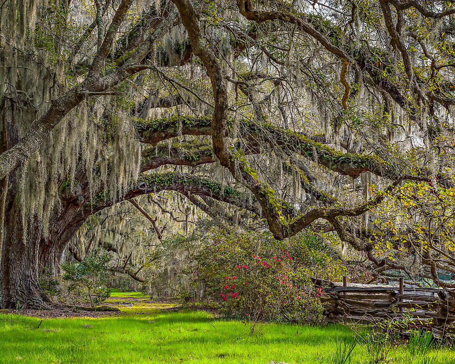 Charleston Photograph - Southern Charm by Steve DuPree