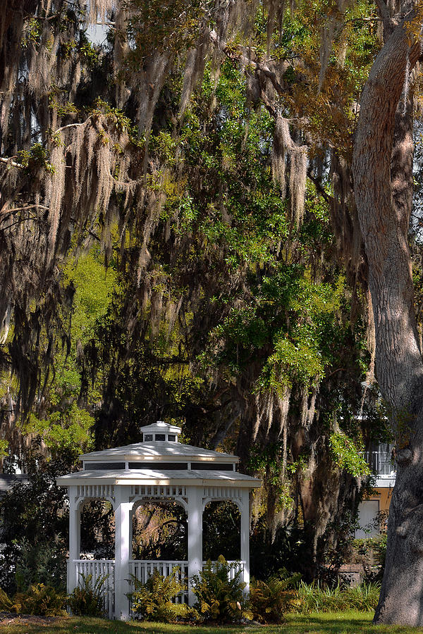 Southern Gothic In Mount Dora Florida Photograph  - Southern Gothic In Mount Dora Florida Fine Art Print