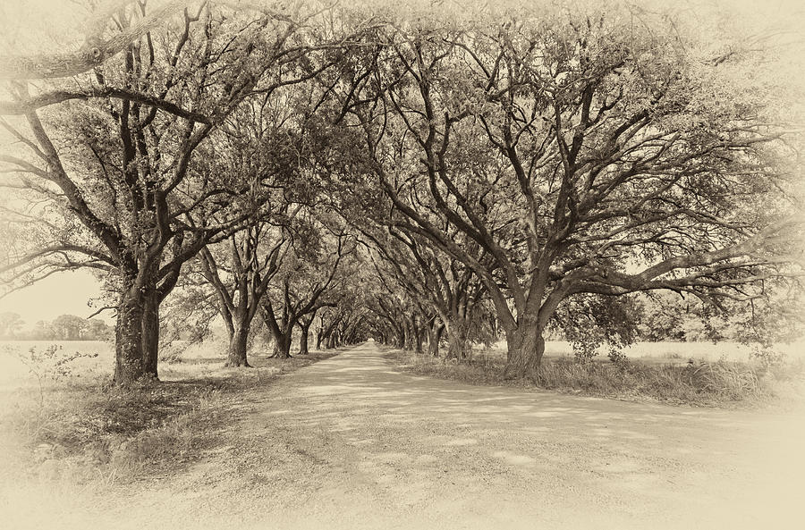Southern Journey Sepia Photograph