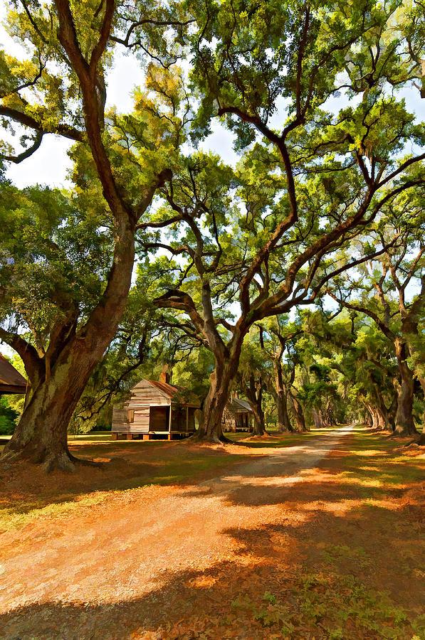 Evergreen Plantation Photograph - Southern Lane Paint Filter by Steve Harrington