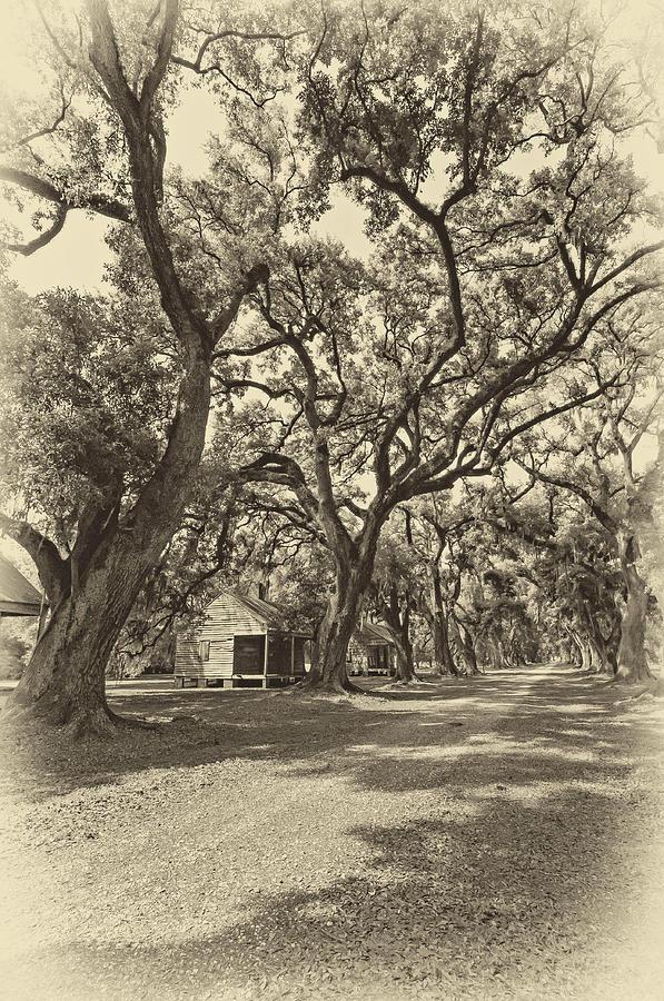 Southern Lane Sepia Photograph