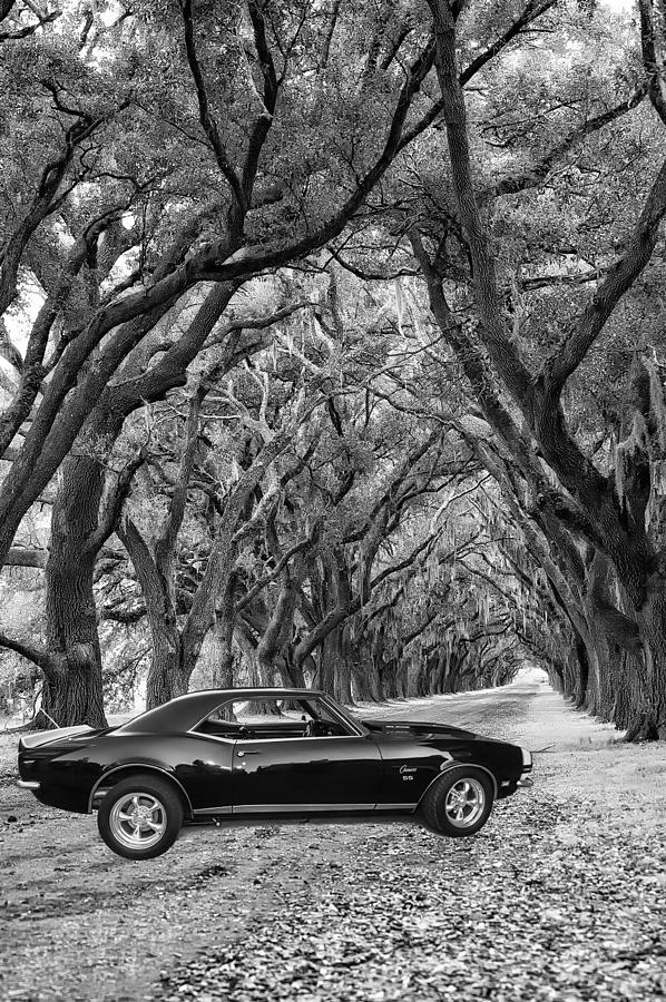 Southern Muscle Photograph