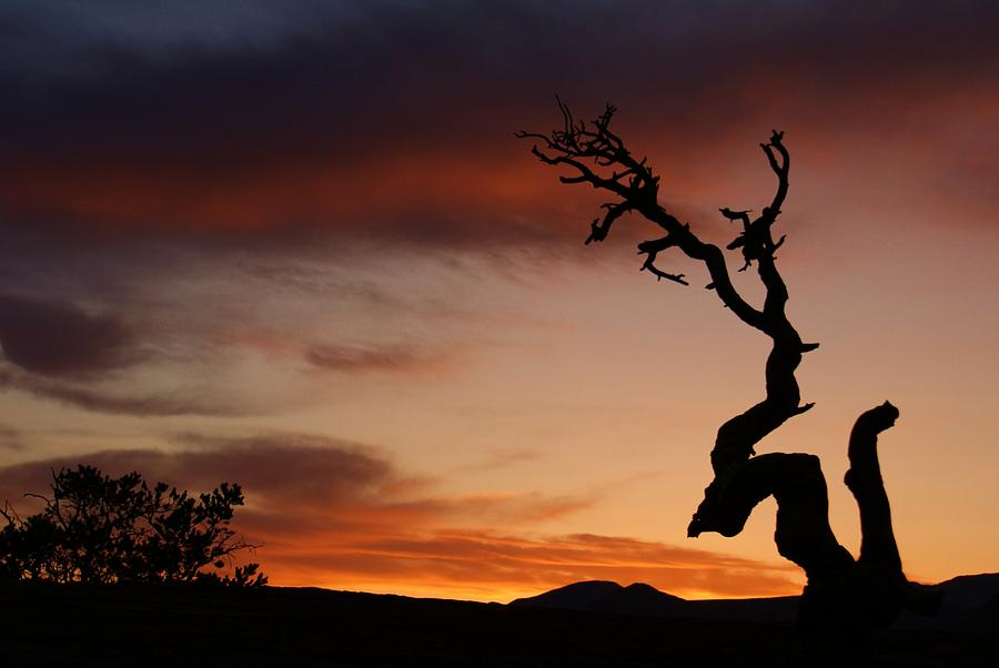 Southwest Tree Sunset Photograph