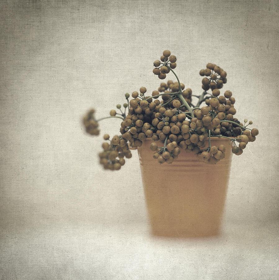 Still Life Photograph - Souvenirs De Demain by Taylan Apukovska