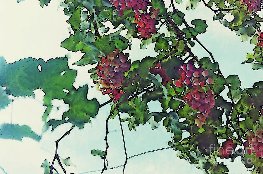 Spanish Grapes Photograph  - Spanish Grapes Fine Art Print