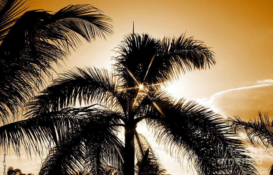 Sparkle Through The Palms Photograph