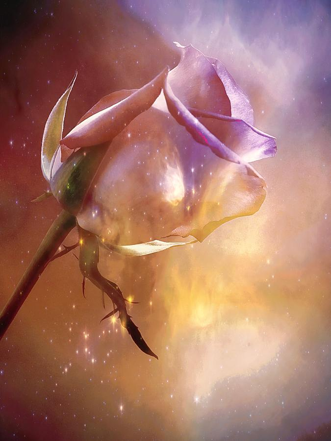 Rose Photograph - Sparkling Rose by Anne Macdonald