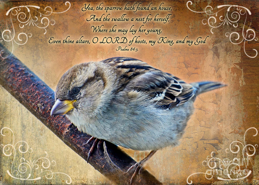birds christian personals Google images the most comprehensive image search on the web.