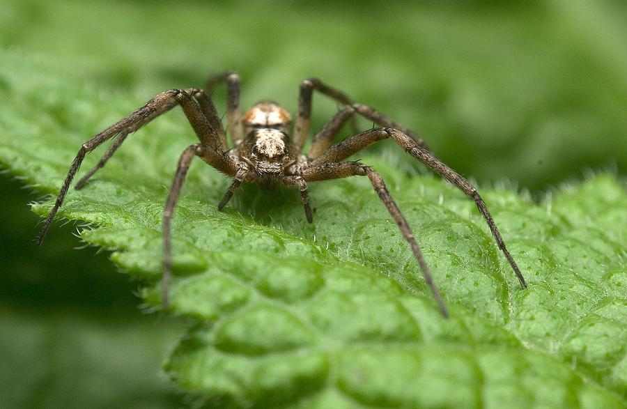 Spider I Photograph