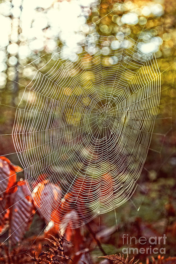 Background Photograph - Spider Web by Edward Fielding