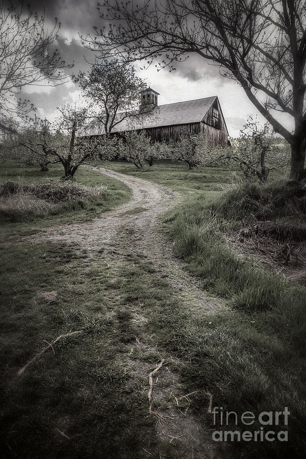Spooky Apple Orchard Photograph