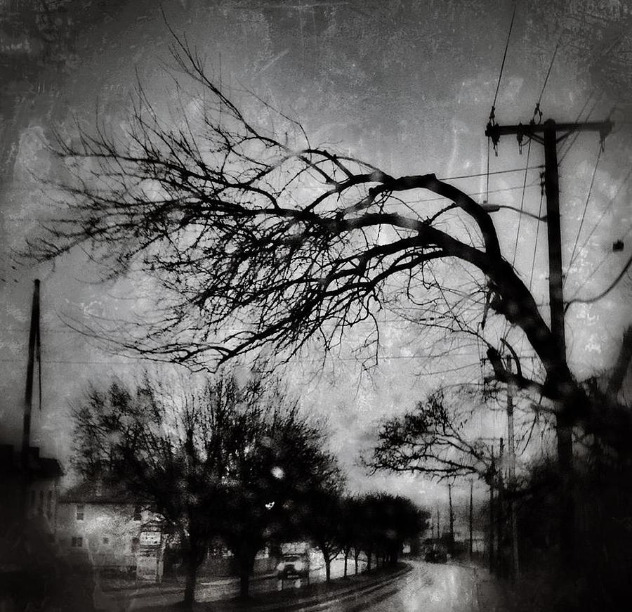 Spooky Tree Photograph  - Spooky Tree Fine Art Print