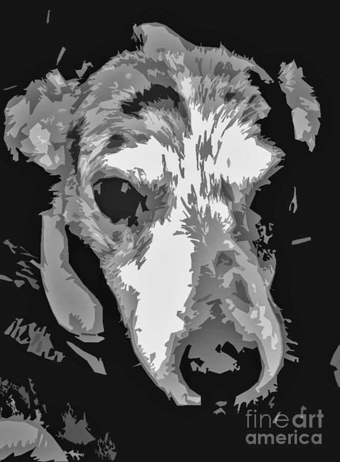 Spotted Dog Black And White Photograph