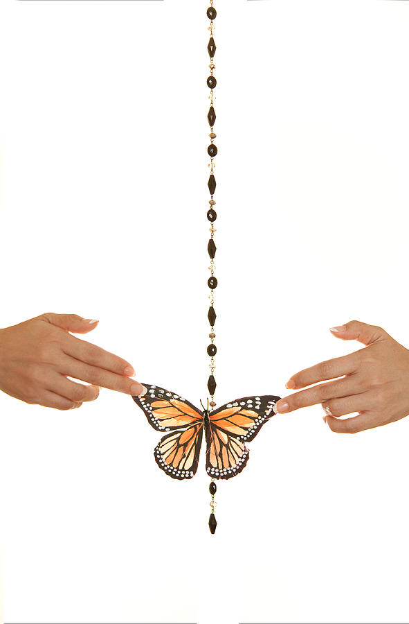 Spread Your Butterfly Wings Photograph