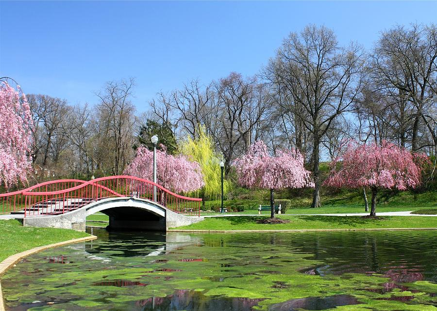Spring At Italian Lake Photograph