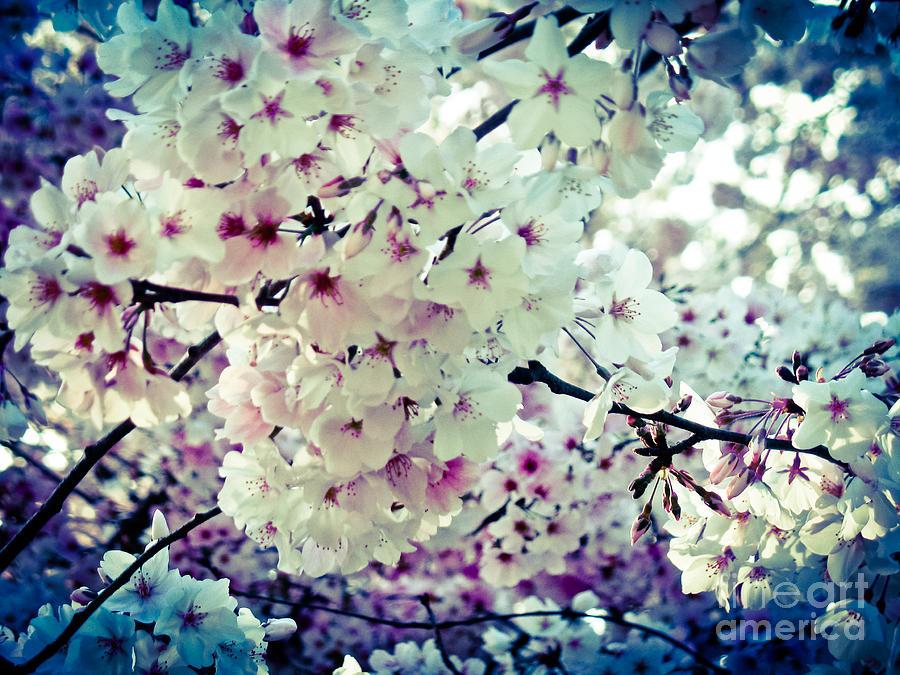 Spring Blooms I Mixed Media