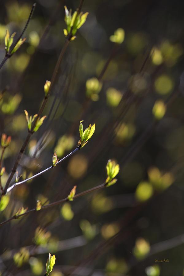 Spring Bokeh Photograph