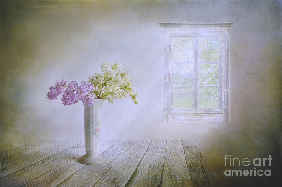 Spring Dream Photograph