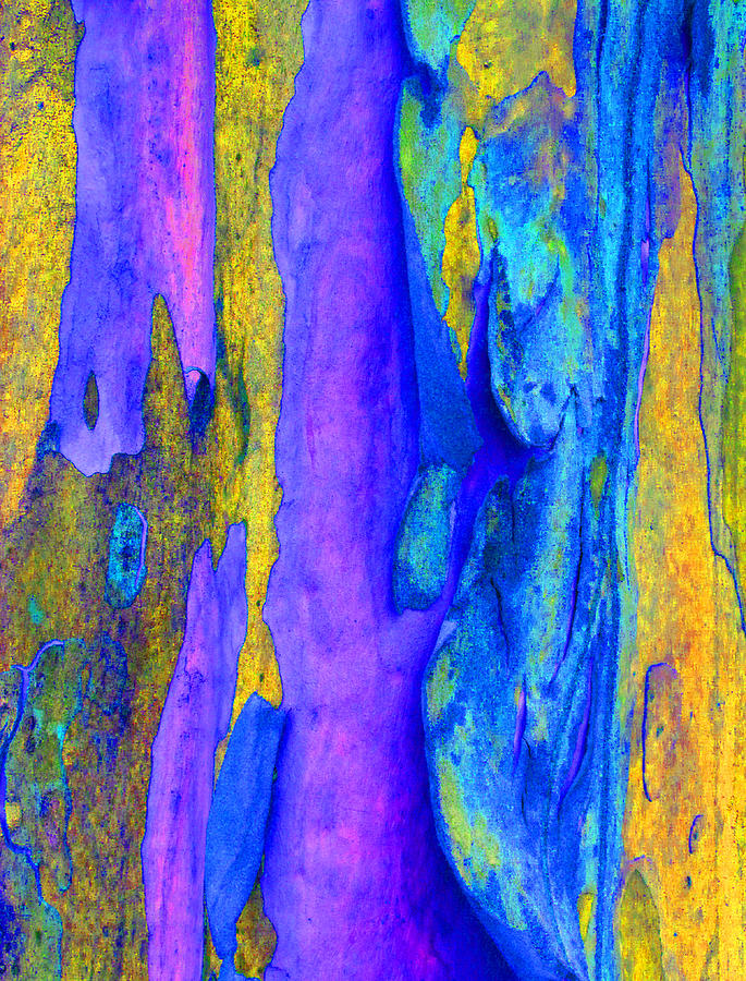 Spring Eucalypt Abstract 7 Photograph  - Spring Eucalypt Abstract 7 Fine Art Print