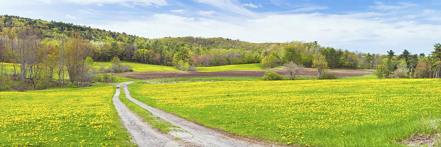 Spring Farm Landscape With Dirt Road And Dandelions Maine Photograph