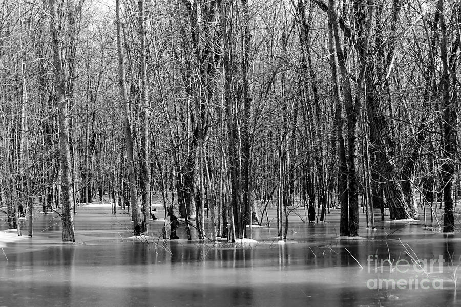 Spring Flooding Photograph  - Spring Flooding Fine Art Print